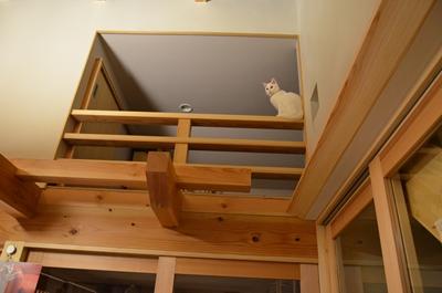 愛猫と暮らす家
